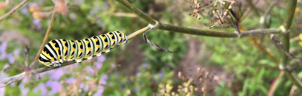 Glendening Nature Preserve