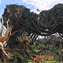 Disney, April 2018 - Monday - Animal Kingdom