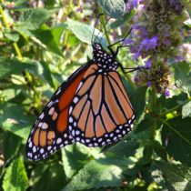 Butterfly Garden - September 2017