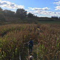 Corn Maze 2018